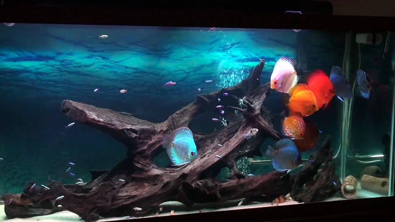 Discus 120g Hd Youtube