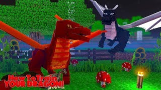 HOW TO TRAIN YOUR DRAGON - THE FIRE DRAGONS ATTACKED?! #26 w/ Little Lizard