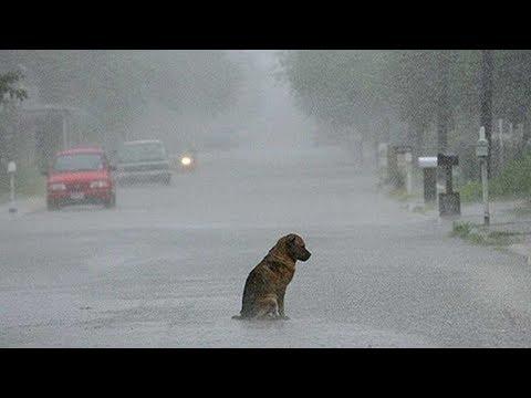 10 yıl Boyunca Ölen Sahibini Bekleyen Köpeğin,  En Son Ne Yaptığına inanmayacaksınız