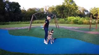 "Super German Shepherd ""Simba"" Tricks Obedience Compilation Wow!!!!"