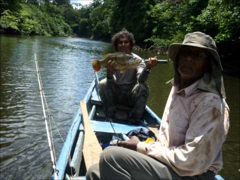 Boven Coesewijne, op het stuwmeer en in Apoera. Vissen in Suriname 2010: http://youtu.be/obHWvNr3Shk.