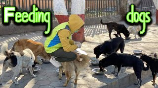 Feeding masu bhaat to stray dogs during a lockdown !!