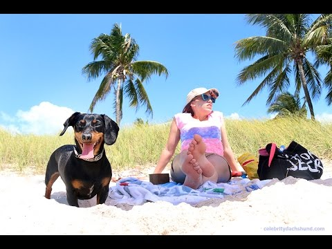 Crusoe's Dog-Friendly Florida Vacation 2015