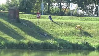 Robot na dálkové ovládání na sekání trávy