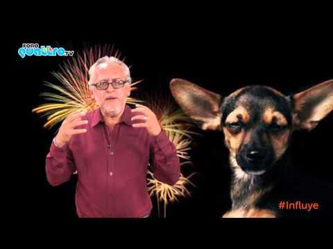¿Cómo proteger a tu perro de los efectos de los fuegos artificiales en estas fiestas patrias?