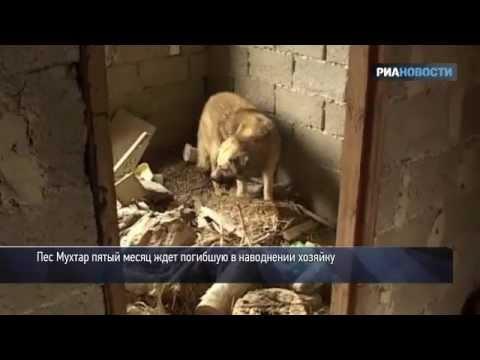Крымский Хатико: как пес ждет погибшую хозяйку