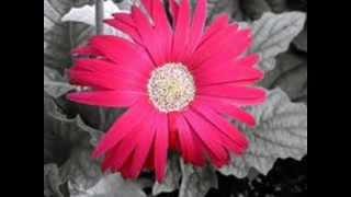 Do Paal Ruka - Veer Zara - Full Song
