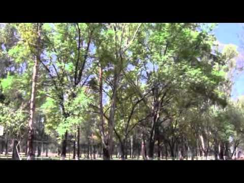 LOCALIZAN 3 ESPECIES NATURALES EN LAS ÁREAS PROTEGIDAS DE CELAYA