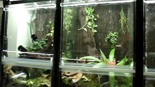 Brooklyn Dart Frogs Frog Room
