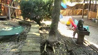 Outside Dog Yard Cam 07-17-2018 08:05:30 - 09:01:03
