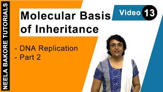 Molecular Basis of Inheritance - DNA Replication - Part 2