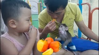 Baby Monkey | Doo Plays And Eats Fruits With His Daddy And Brother - Funny Animals
