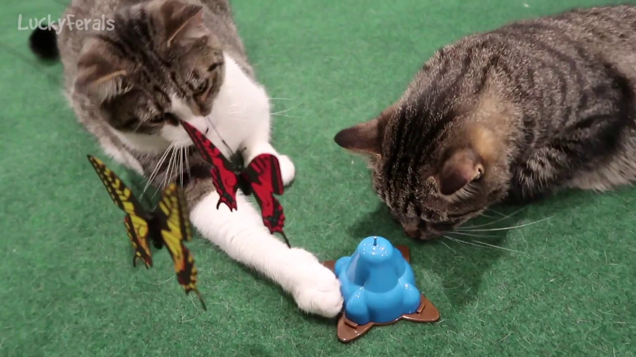 Cats playing with toys