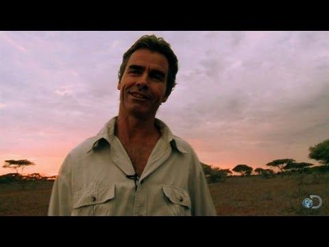 Black Rhino Standoff | Man, Cheetah, Wild