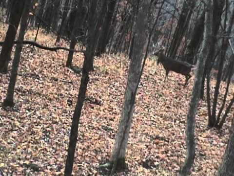 180 Inch Monster! Bowhunting Giant Wisconsin Deer