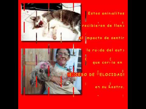 Campaña 2009 contra Accidentes de Transito provocados a Animales.