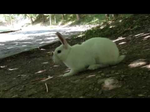 kraker yiyen tavşan