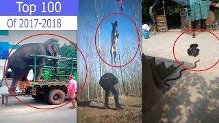 Top 100 Viral Videos of the Year 2017 - Top Amazing Videos of the World - Viral Amazing video