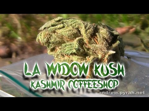LA WIDOW KUSH Kashmir Coffeeshop & Flytlab H2Flo Vaporizer Review - Amsterdam Weed Review 2015