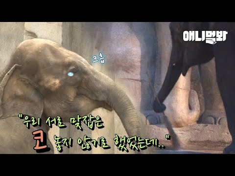 남친이랑 헤어지고 방청소하다가 우는 코끼리 하티 ㅠㅠ ㅣ Elephant Cries While She Cleans Her Room After A Breakup