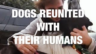 Dogs Reunited With Their Humans