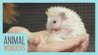 Prickle the Hedgehog's New Home and Nail Trim