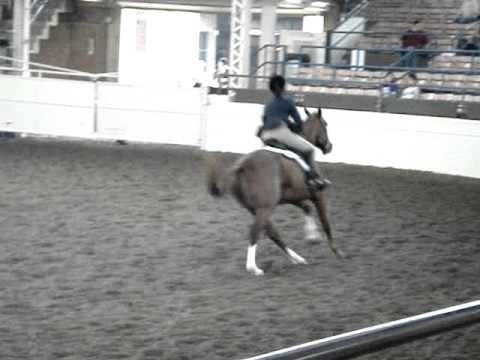 CC Copper Baby- Hunter Over Fences 2010 Video
