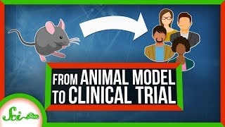 How We Go from Animal Model to Clinical Trial