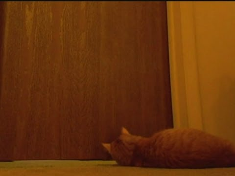 Cute cat alarm clock goes viral