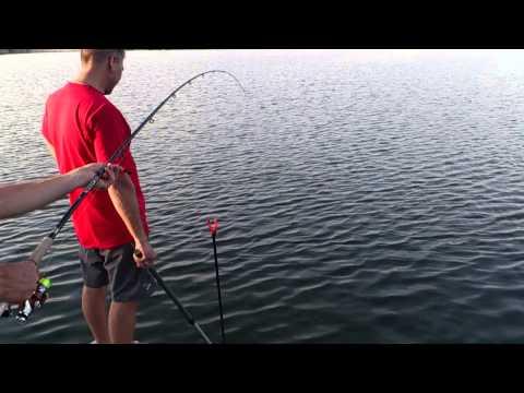 рыбалка на белого амура в ютубе