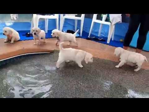 2 5 15   Puppies First Swim & Jump! video