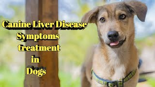 Canine Liver Disease in Hindi #doguniquecafe !Symptoms, treatment & Causes |