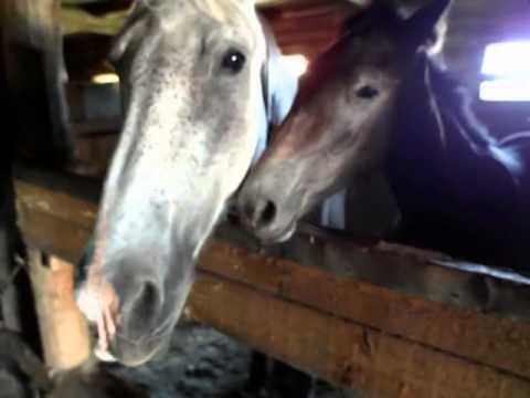 Иду кормить лошадей (вместо воскресного видео)