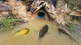 The First Trap Can Catch A lot of fish By PVC Water Pipe - The Best Deep Hole Fish Trap