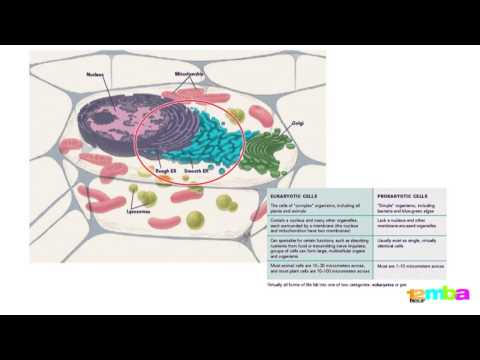How to understand stem cells - 12 Hour MBA - Terrapinn Training