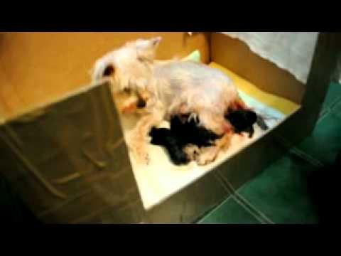 Сценарий новогоднего праздника с лисой алисой и котом базилио