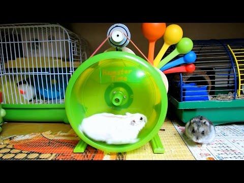 ЖИЗНЬ ХОМЯКОВ   Hamster Time