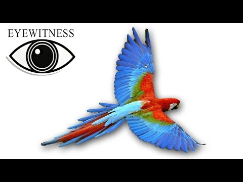 EYEWITNESS | Bird | S1E2