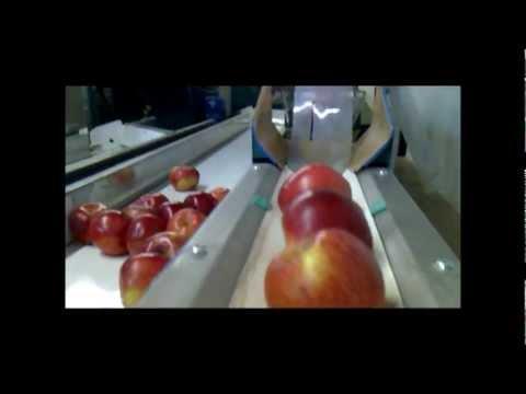 Recogedor manual de manzanas