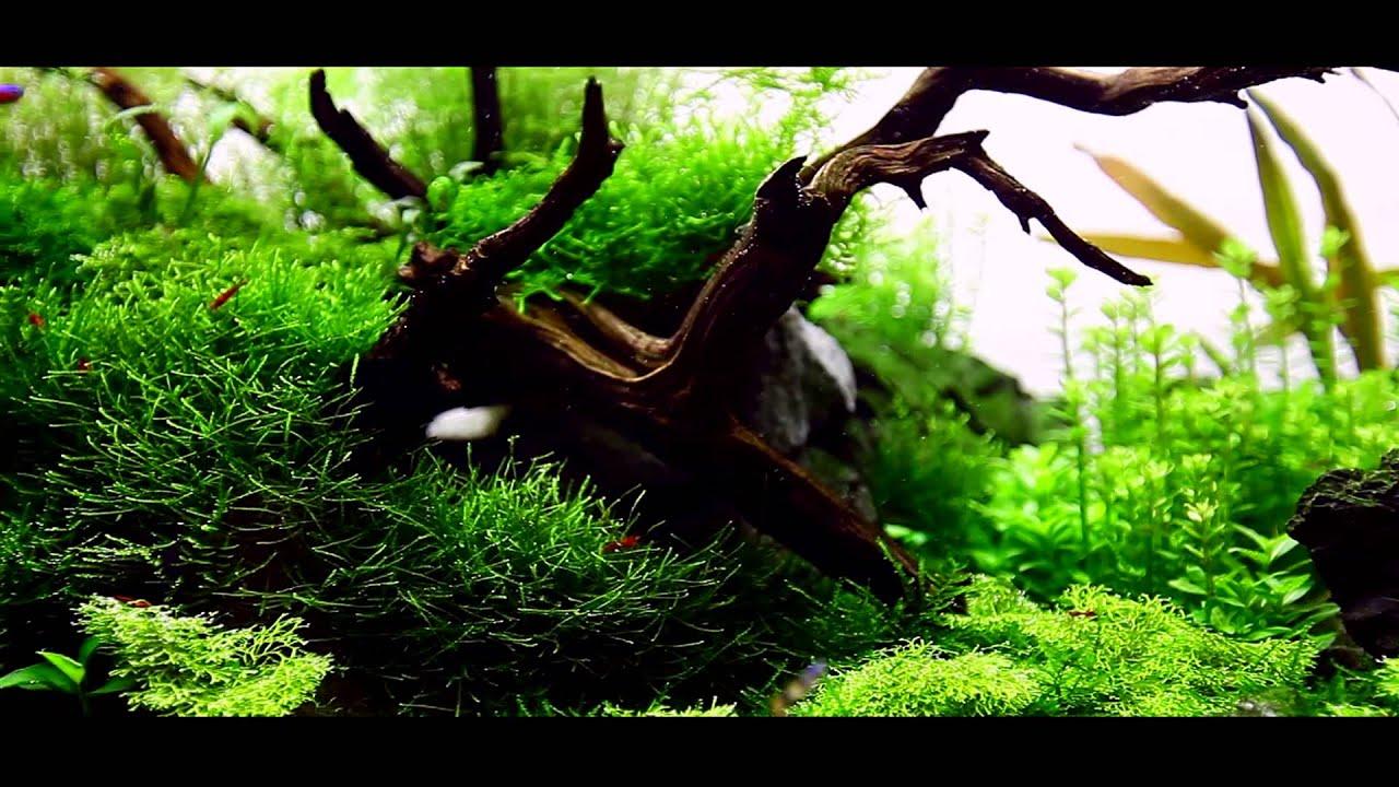 Mark Evans Nature Aquarium - YouTube