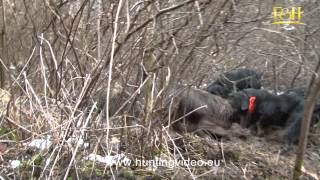 Wild Boar And Roe Deer Hunting In Hungary Tógazda Safari (HD).mpg