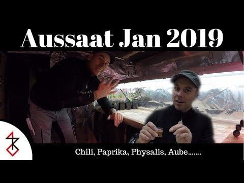 Aussaat Januar 2019 | Endlich ist es soweit