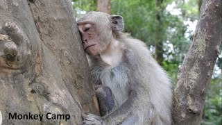 What happen with baby monkey? - Why Amber face very sad? - Monkey Camp part 2193