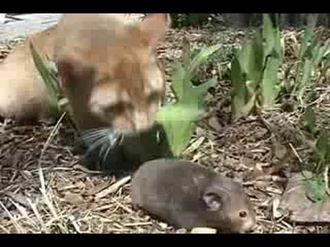 Funny cats (Home videos)