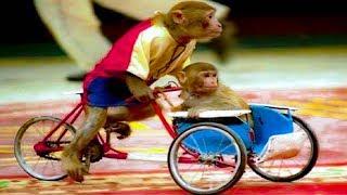 Con khỉ - Nhạc thiếu nhi remix sôi động cho bé