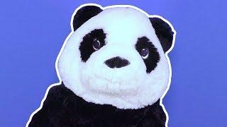 Toy Plushy Panda! Baby Show «Toy Bombastic» 🐼 😲 👍