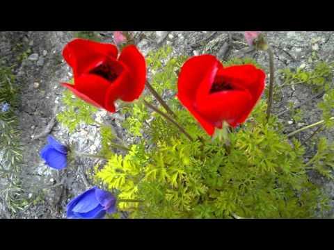Love Song - Enya