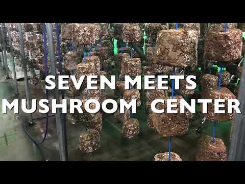 きのこ屋が教える椎茸の菌床作り(放冷編)