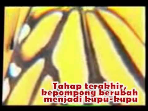 Video pembelajaran Metamorfosis