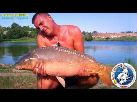 ловить толстолобика на озере